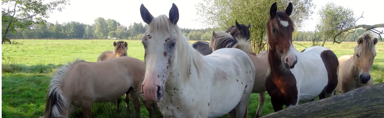 paardenplant4