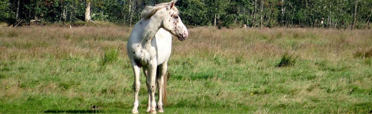paardenplant5